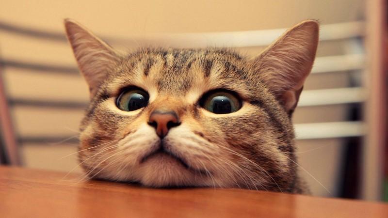猫動画で癒やされると、モリモリやる気が出るという研究結果が発表される